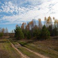 краски осени :: Алексей Клименко