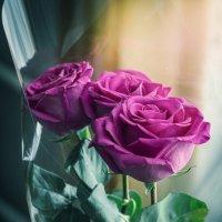 розы :: Александр Никишков