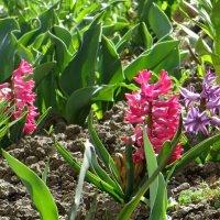 Весна ликует, в ярких красках и птичьем пеньи... :: Татьяна Смоляниченко