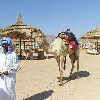 Бедуин. :: Лия ☼