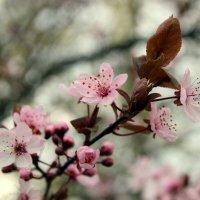 Весна.. :: Эдвард Фогель