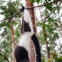 Утренние процедуры... Мадагаскар! :: Александр Вивчарик