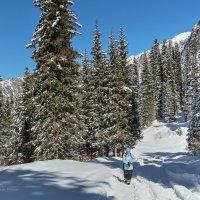 В горы по новому снегу :: Сергей Мурзин