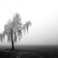 туман :: Stas .