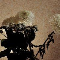 Хризантемы с 8 Марта :: Юрий Гайворонский