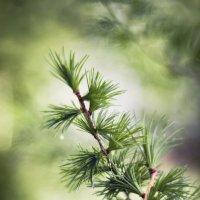 Запах леса :: Татьяна Зубрицкая