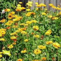Неугомонные цветочки.... :: Светлана Z.