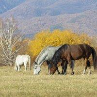 кони :: vusovich oleg
