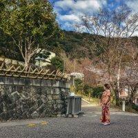 В дни цветения сакуры :: Shapiro Svetlana