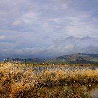 Трава на ветру. :: Штрек Надежда