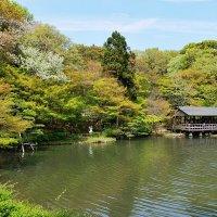 Нагоя, ботанический сад Higashiyama :: Swetlana V