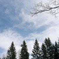 Весеннее небо :: Елена Байдакова