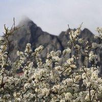 Весна :: Геннадий Валеев