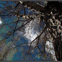 Скоро зима... :: Farin Алёна