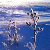 Зимний привет,из снежной степи. :: Хлопонин Андрей Хлопонин Андрей
