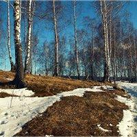 Косогор..Весна.. :: Александр Шимохин