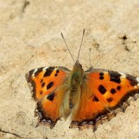 и снова бабочки 27 - вчерашний улов :: Александр Прокудин