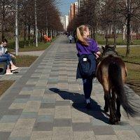 В парк, на работу. :: Татьяна Помогалова
