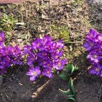 А природа празднует весну! :: Надежда