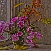 Вспоминая осень  и хризантеммы :: Ольга Винницкая (Olenka)