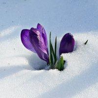 31 марта. Весна в разгаре :: Юрий Пучков