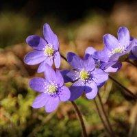 Лесные цветочки.. :: Татьянка *