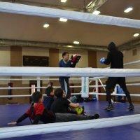 Привыкаем к рингу,пацаны... :: Андрей Хлопонин