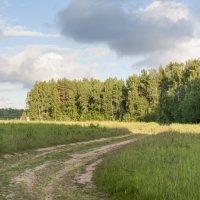 Деревенская дорога. :: Alexandr Gunin
