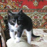 Я страшен в гневе :: sm-lydmila Смородинская