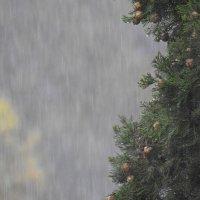 Дождь. Кипарис. Мир в оконном проеме. :: Гала