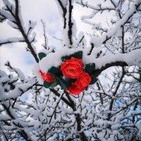 Цветочки :: Инга Энгель