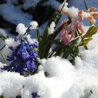 под снегом :: ИННА