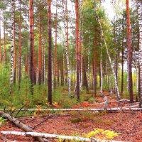 В осеннем лесу :: Андрей Снегерёв