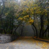 В старом парке........... :: Юрий Цыплятников