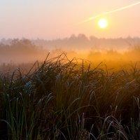 Туманным утром 3 :: Юрий Морозов
