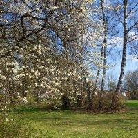 Цветёт природа, мир цветёт, И наша хрупкая душа, Весною зацветает... :: Galina Dzubina