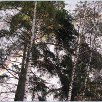 радуга в лесу.... :: Maikl Smit