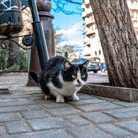 Кот с Гаванной улицы :: Олег Шендерюк