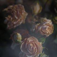 Карантинный фотоэксперимент :: Андрей Вигерчук