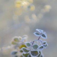 морозное утро :: Евгения Кирильченко