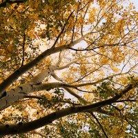 Деревья :: Родион Вайс