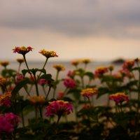 the flowers :: Sasha K