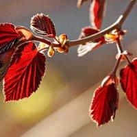 Весной распускаются листья... :: Ирина Румянцева