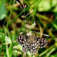 и снова бабочки 93 :: Александр Прокудин