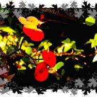 Цветики молочая  апрельского... :: Евгений БРИГ и невич