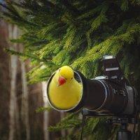 Внимание - ,, Птичка ,, :: Va-Dim ...