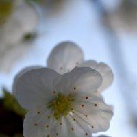 Волшебство весны... :: Nina Streapan