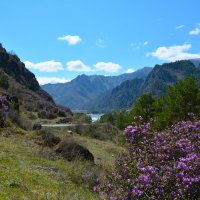 Весна в горах. :: Валерий Медведев