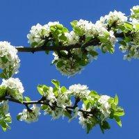 Весна :: Лидия Бусурина