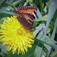 Вот и бабочки стали летать-2 :: Асылбек Айманов